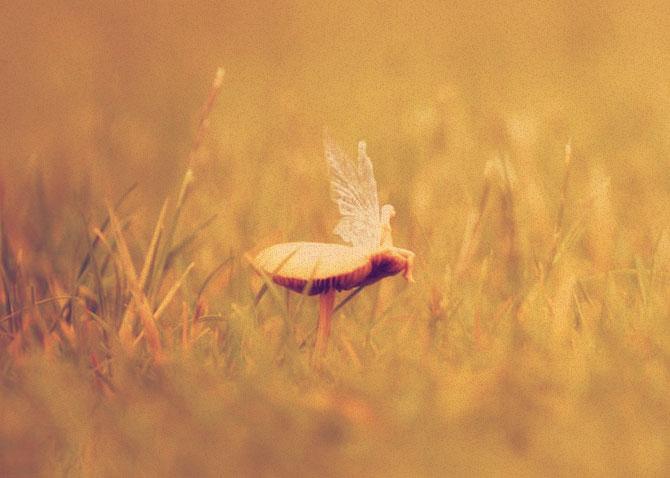 Живая фея сидит на грибе в поле.