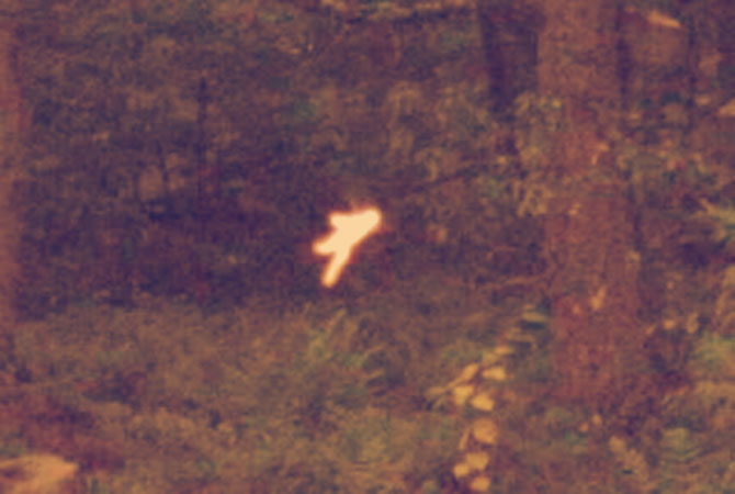 Магическое существо в лесу.