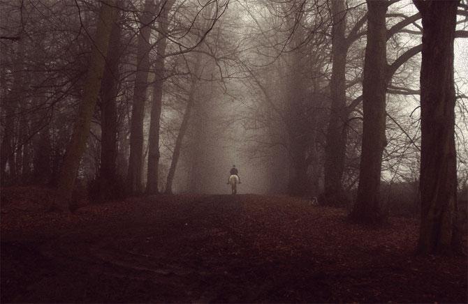 Одиночество и туман в лесу.