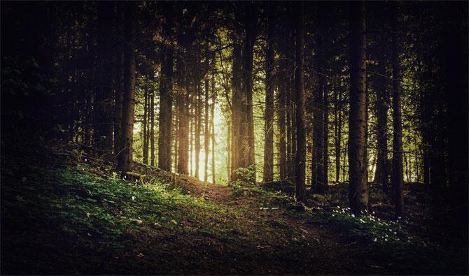 Тёмный дремучий лес, в котором не ступала нога человека.