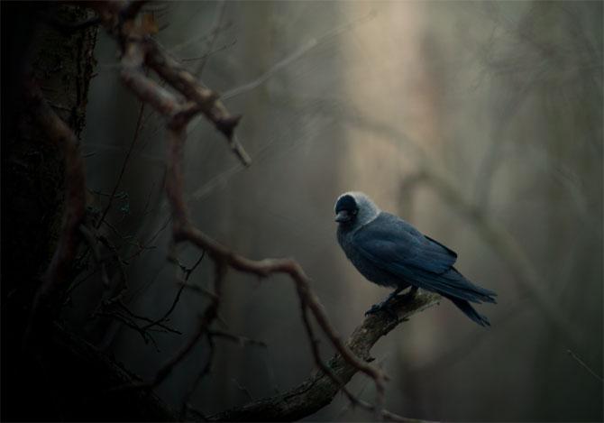 Страшный ворон на ветке сгнившего дерева.