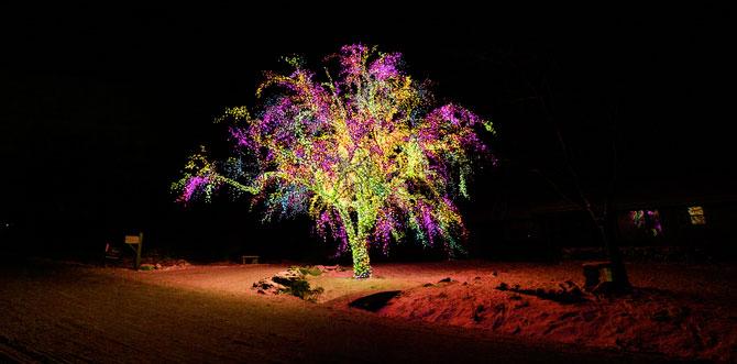 Яркое дерево посреди темноты.